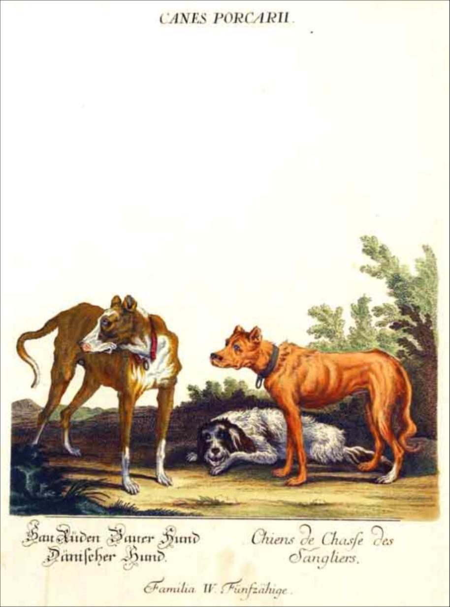 basset griffon historie